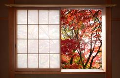 Sun shining through red autumn maple leaves outside a window in fall. Simple generic window on an old Japanese home opened to enjoy the warm colors of autumn Royalty Free Stock Images