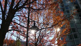 Sun shining through red autumn trees leaves modern city. Moving shot autumnal park red foliage sunbeams stock video