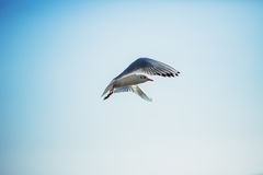 The sun is shining and seagull flying in the blue sky Royalty Free Stock Photography