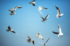 The sun is shining and seagulls flying in a group in the sky Royalty Free Stock Photos