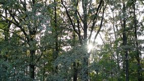 Sun shining and shimmering through tree foliage stock video
