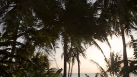 Sun shining through silhouetted tropical plants. Video of sun shining through silhouetted tropical plants stock footage