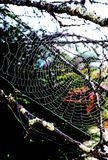 Sun shining on spider,wwb. Sun shining on spider web with blue sky Royalty Free Stock Images