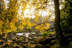 Stones in Quiet Creek in Autumn Forest royalty free stock photo