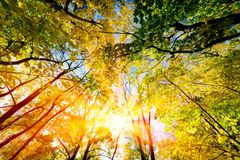 Sun shining through summer, autumn trees and colorful leaves. Nature Royalty Free Stock Photos