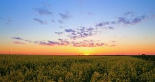 Sun Shining At Sunset Sunrise Over Horizon Of Spring Flowering Canola, Rapeseed, Oilseed Field Meadow Grass. Blossom Of stock video