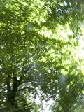 Sun shining though green tree branches as they are spinning Royalty Free Stock Images