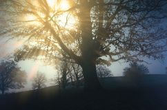 Free Sun Shining Through Fog In Branches Of Tree On Meadow Stock Images - 118255864