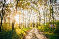 Free Sun Shining Through Forest Woods Over Lane, Country Road. Path, Royalty Free Stock Photography - 114570647