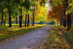 Sun Shining Through The Trees On A Path Stock Photography