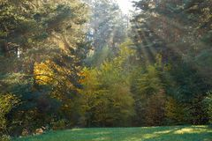 Free Sun Shining Through The Trees On A Path In A Golden Forest Landscape Setting During The Autumn Season Stock Photo - 158671660