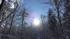 Sun in the winter forest stock video