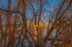 Sun Shining Thru trees royalty free stock photos