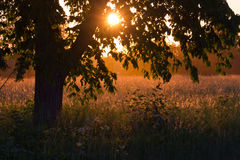 Sun shining through the tree Royalty Free Stock Photography