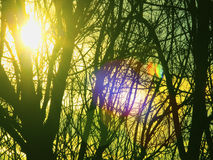 Sun is shining through tree branches Stock Images