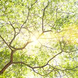 Sun shining through tree branches and bright green leaves. Spring summer sumnny day nature background royalty free stock photo