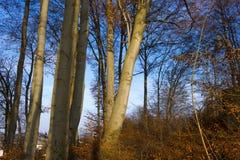 Sun shining through tree branches Royalty Free Stock Image