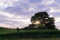 Sun shining through tree branches Stock Photography