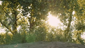 Sun shining through tree branches on sandy beach stock video footage