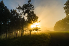 Sun shining through tree crowns and fog Royalty Free Stock Image
