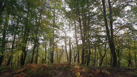 Sun shining through the  tree crowns. This footage is taken in the middle of the woods in autumn colours on the sunny day stock footage
