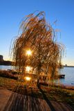 Sun shining through tree by lake Stock Photography