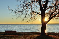The Sun Shining Through a Tree in the Late Fall Royalty Free Stock Photo