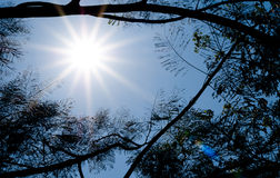 Sun shining through tree. Stock Photography