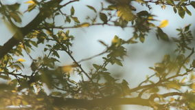 Sun shining through tree leaves and branches at sunset. Beautiful warm spring evening stock video