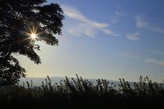 Sun shining through tree in a morning Stock Photography