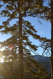 Sun shining through the tree Royalty Free Stock Photos