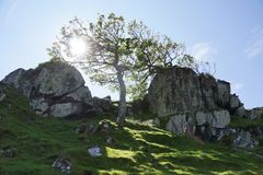 Sun is shining into a tree. In scotland Stock Photo