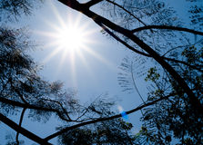 Sun shining through tree. Stock Image