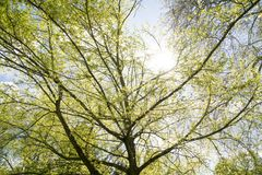 The sun is shining through a tree Stock Image