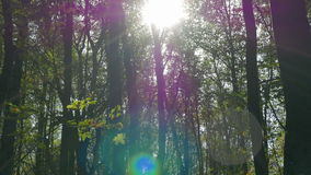 The sun shining through tree trunks. Autumn in the deciduous forest. Shooting movies in 4K and downscale to Full HD. The shutter speed is 1/50. With the use of stock video footage