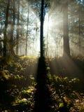 Sun shining through the trees Royalty Free Stock Photo