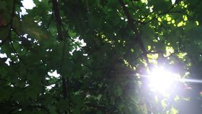 Sun shining through trees stock video