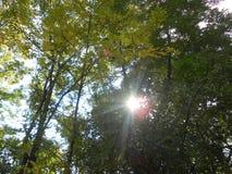 Sun shining through trees Royalty Free Stock Photos