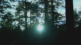 Sun shining through trees stock video footage