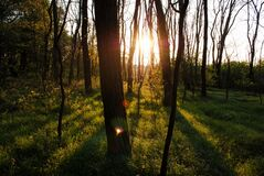 Sun Shining Through Trees in Forest Stock Photos