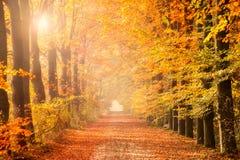 Autumn forest path color sunshine Stock Photo