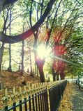 Railings. Sun shining through trees with golden leaves and autumn feel Stock Photos