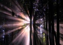 Sun Shining Through Trees at Night Royalty Free Stock Image