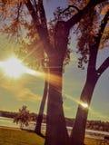 Sun shining through trees Royalty Free Stock Images