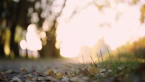 Sun shining through the trees on a path in a golden forest landscape on blurred backgound. 1920x1080. Sun shining through the trees on a path in a golden forest stock video footage