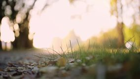 Sun shining through the trees on a path in a golden forest landscape on blurred bokeh backgound. 1920x1080. Sun shining through the trees on a path in a golden stock footage