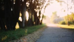 Sun shining through the trees on a path in a golden forest landscape setting during the autumn season on blurred. Sun shining through the trees on a path in a stock footage