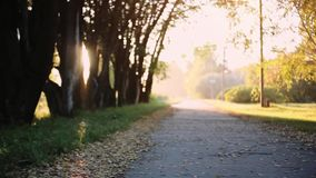 Sun shining through the trees on a path in a golden forest landscape setting during the autumn season with lens flare. Sun shining through the trees on a path in stock video
