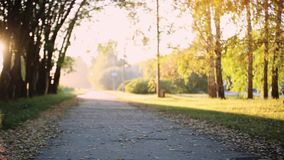 Sun shining through the trees on a path in a golden forest landscape setting during the autumn season with lens flare stock footage