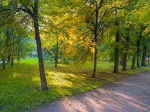Sun shining through the trees on a path Royalty Free Stock Image